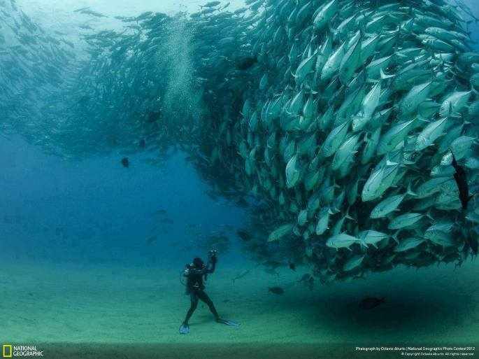 Photographer | Octavio Aburto (National Geographic ) Place : Cabo Pulmo, Baja California Sur, Mexico