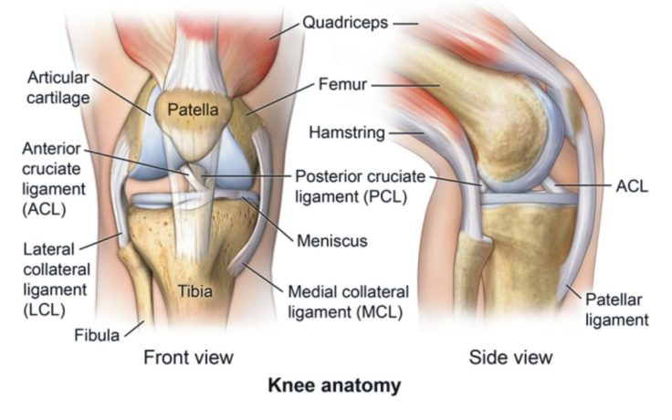 kneeanotomy1-1080x675